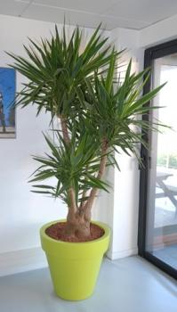 plante interieur pas fragile