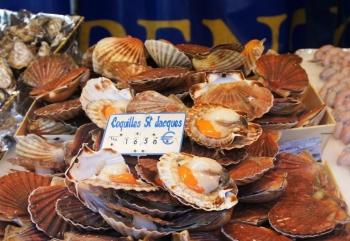 Conseils de chefs les coquilles saint jacques - Cuisiner les coquilles saint jacques ...
