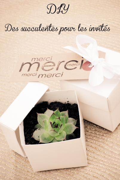 diy des succulentes pour offrir mes invit s. Black Bedroom Furniture Sets. Home Design Ideas