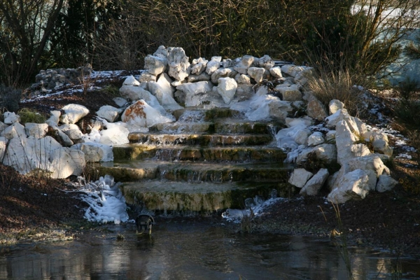 le bassin de jardin,poisson,koi,faune,flore