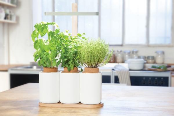 des kits pour faire pousser des champignons chez soi par
