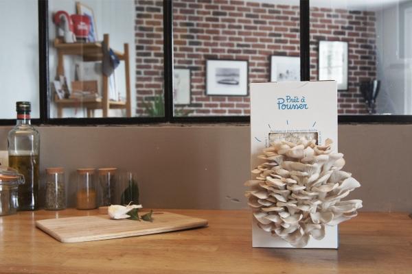 des kits pour faire pousser des champignons chez soi. Black Bedroom Furniture Sets. Home Design Ideas