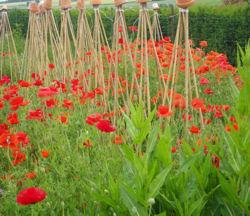 Comment embellir son jardin potager utilement Embellir son jardin